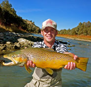Chama Brown Trout WL