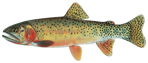 New mexico trout species rio grande cutthroat for New mexico state fish