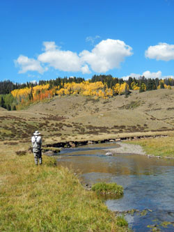 Alpine Meadow Fly Fishing