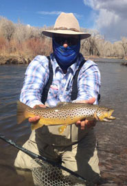 Mountain Brown Trout