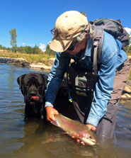 Fly Fishing Dog