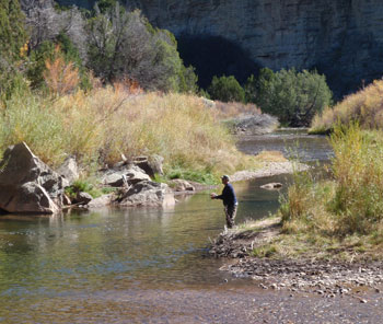 Book A Guided Fly Fishing Trip