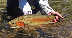 NM Trout Fishing