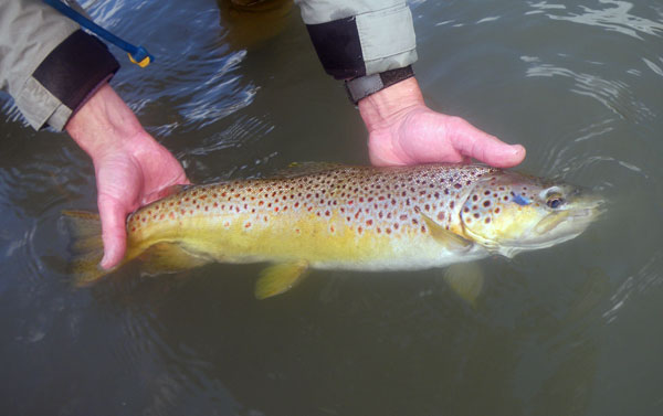 Nm trout related keywords nm trout long tail keywords for New mexico fishing